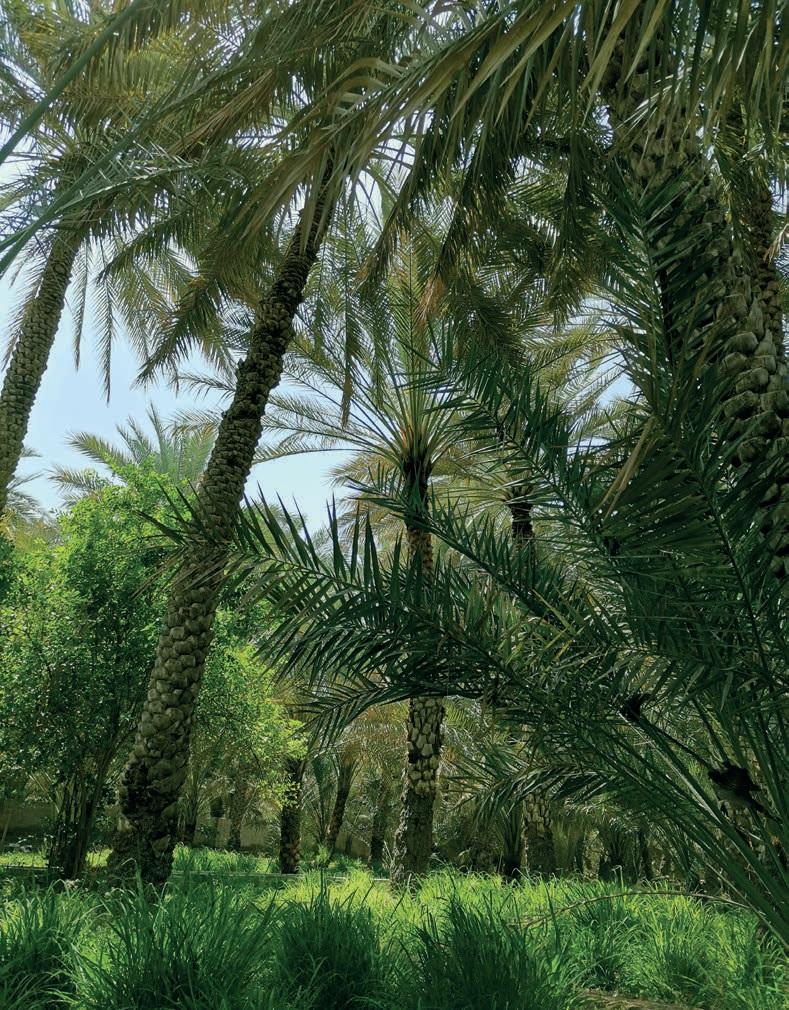 Оазис Аль-Айна