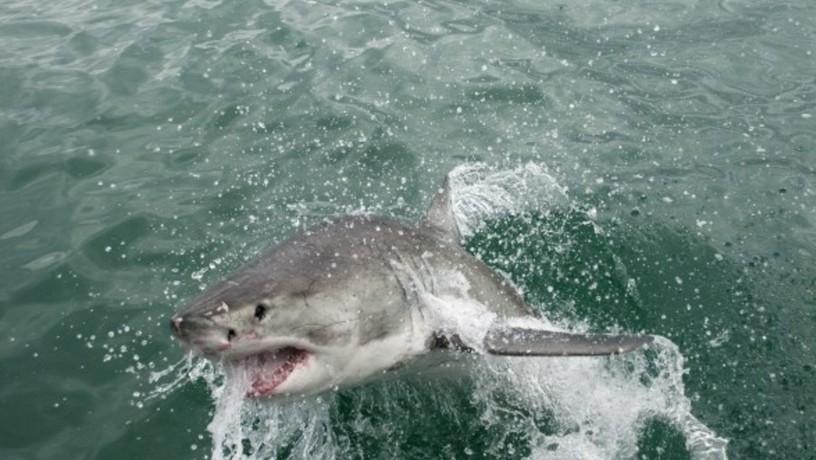 есть ли акулы в дубай